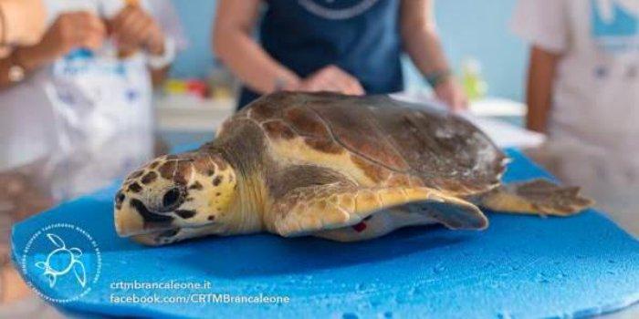 Aaa cercasi volontari per le tartarughe marine ecco tutti for Temperatura tartarughe