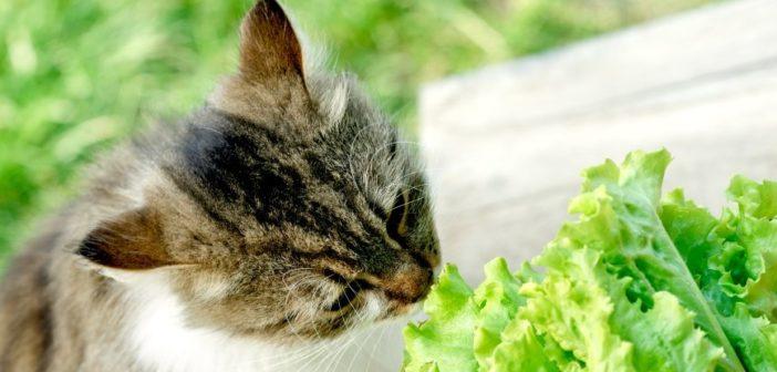 Cè La Tendenza Preoccupante Da Parte Dei Proprietari Di Animali